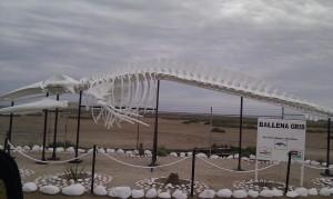 Ballenas skeleton