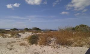 View from the leeward side of the van/beach