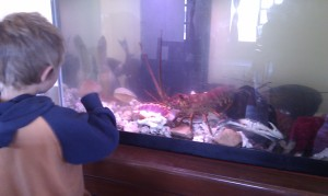 Lobsters, crabs, clams, etc in the tank at the restaurant.
