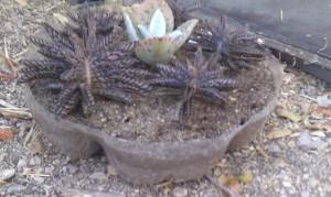 Audrey left a little garden for Toveli to tend
