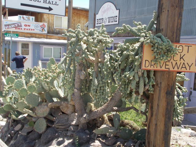 I loved this pic of cacti