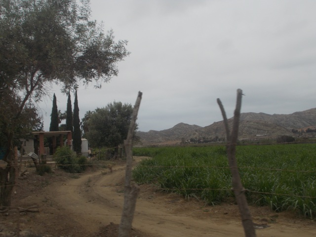 This is the largest agricultural area we've seen on the Baja.