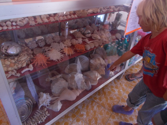 display (in the laundromat) of shark jaw, shells, etc