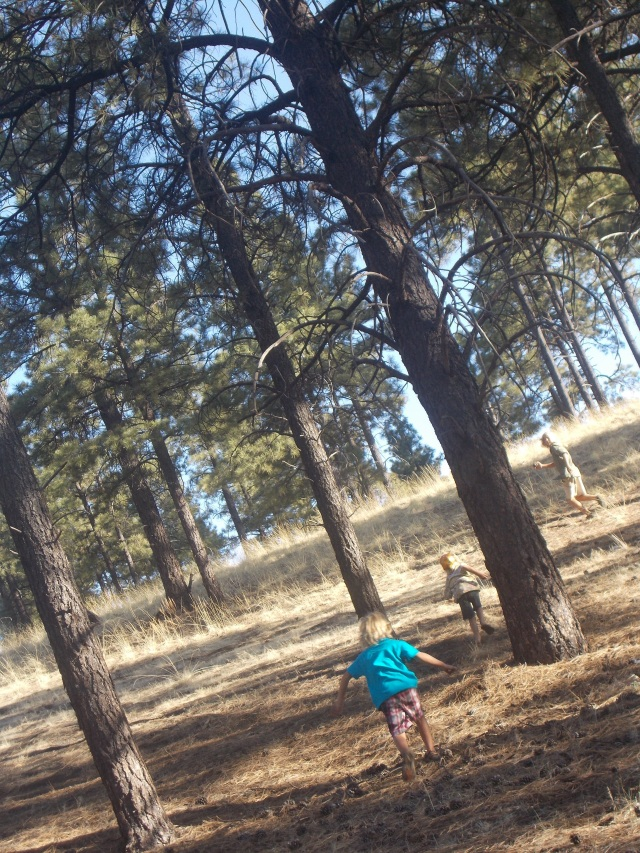 Brothers running in the pine forest