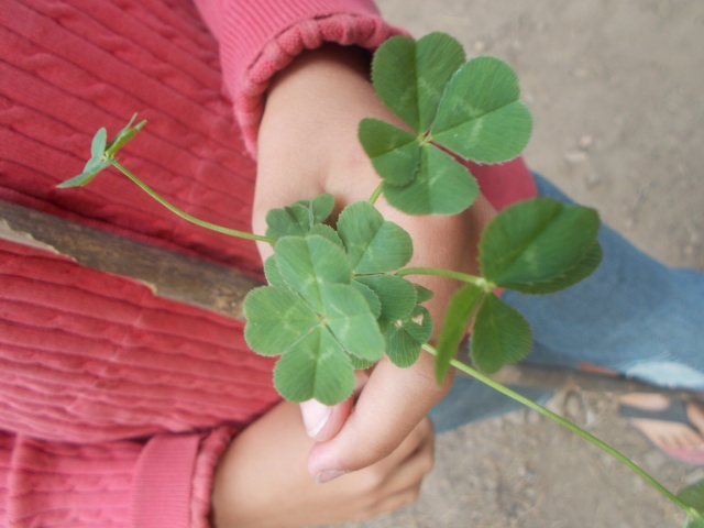 Bouquet of Four Leaf Clovers