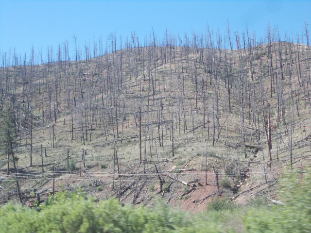 result of forest fire near Deckers