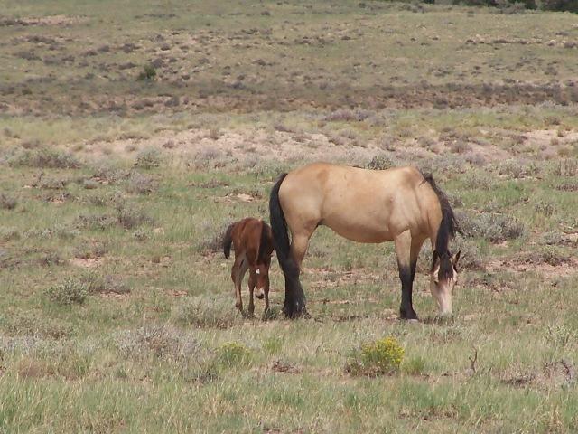 Mare w foal