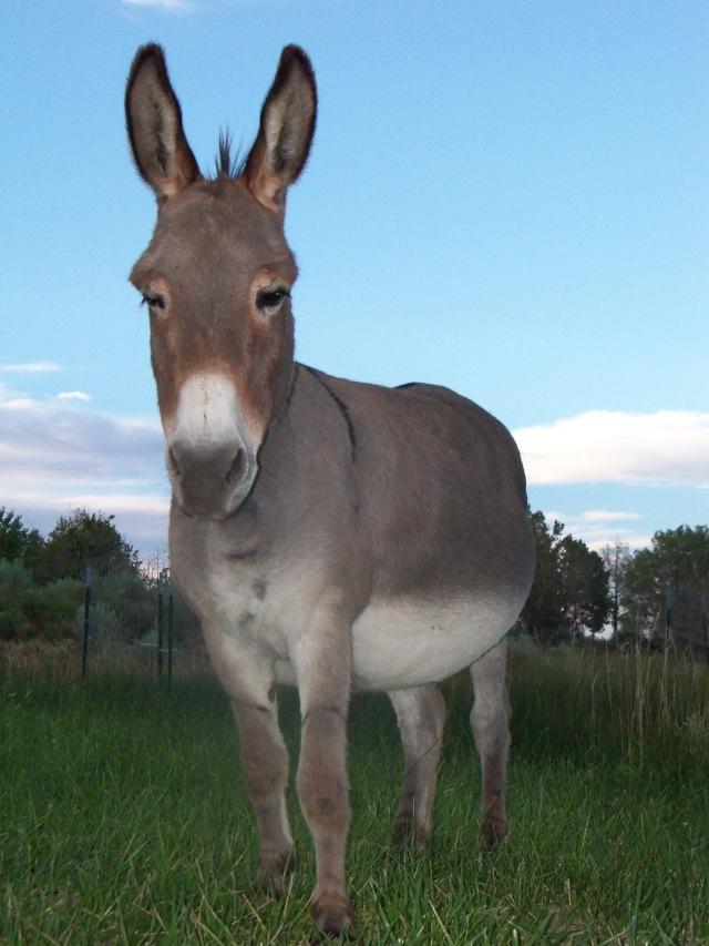 Marcel the donkey