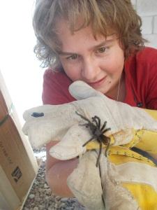 Friendly tarantula
