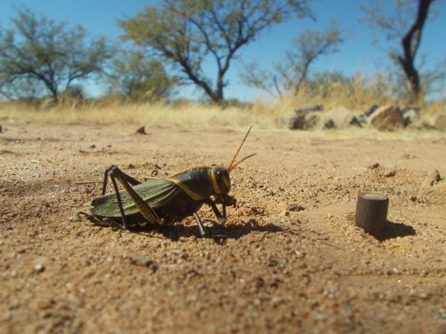 grasshopper color