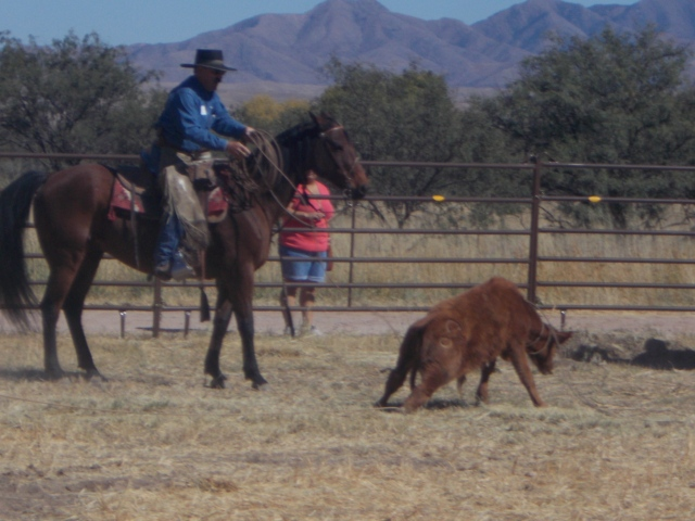 slow-motion calf-roping