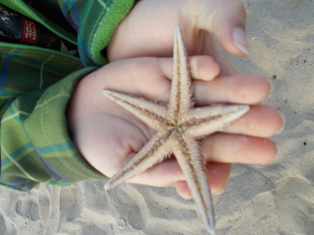 Laars with his first starfish-find now that we are back in Mexico