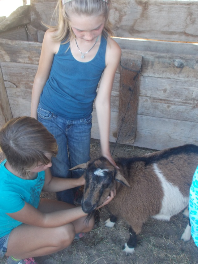 Maret and Toveli with a dwarf Nigerian dairy goat.