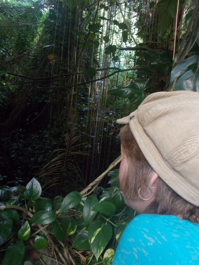 rainforest MC