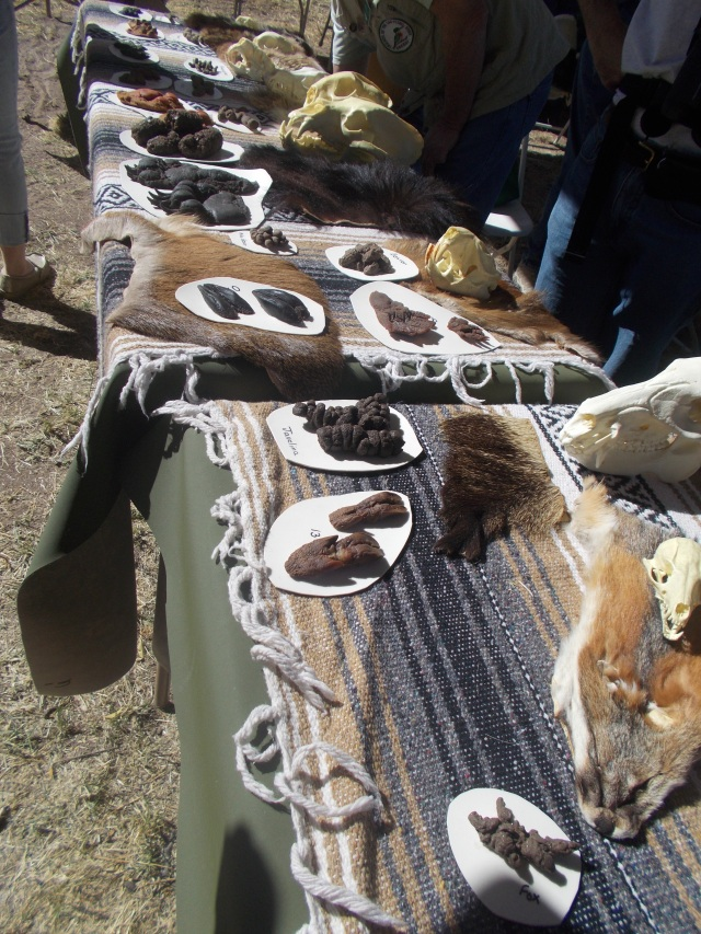 Friends of the San Pedro River Valley displayed scat, footprints, furs, jaws, etc.