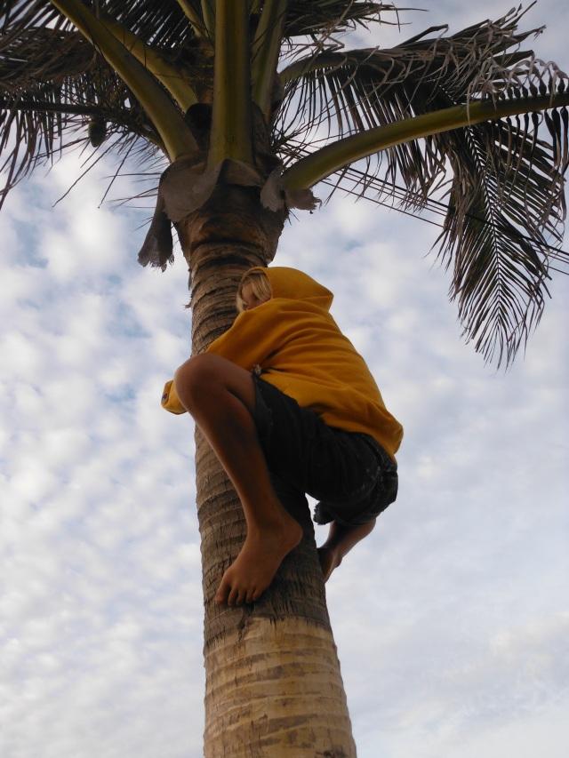 Anders up the palm trees like a koala.