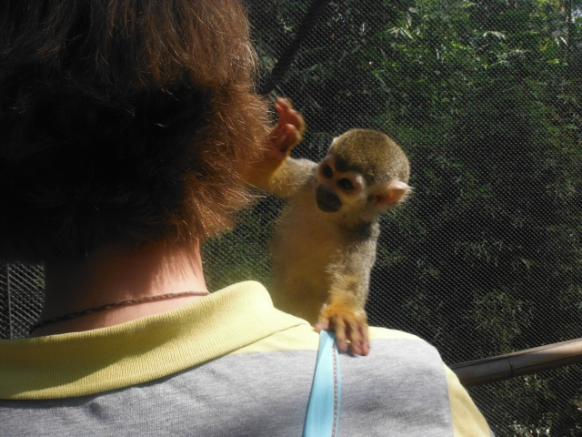 Squirrel monkey climbed all over Maret's head, checking her hair for bugs (hehe), & tried to take the camera away from her.