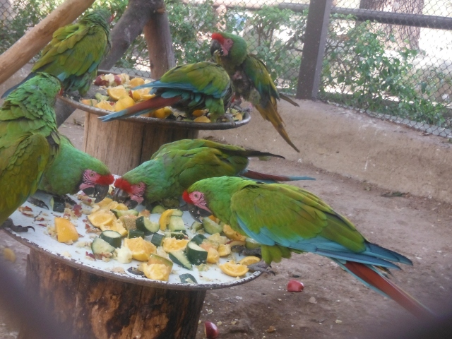 Lunch time for the parrots and us.  They got served, but we didn't.