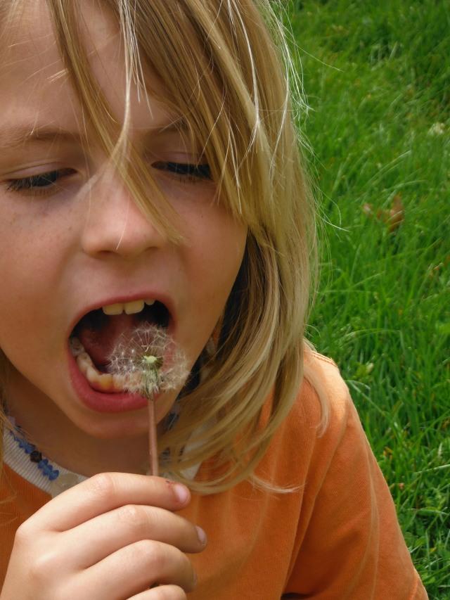Anders eats dandelion