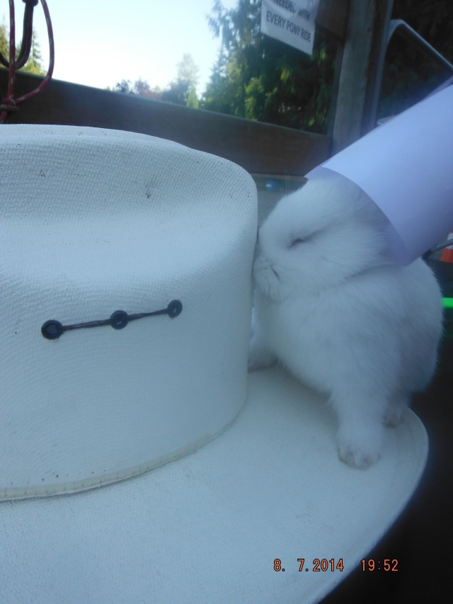 Laars trying to make the bunny where a paper hat when it would rather wear an authentic cowboy hat!