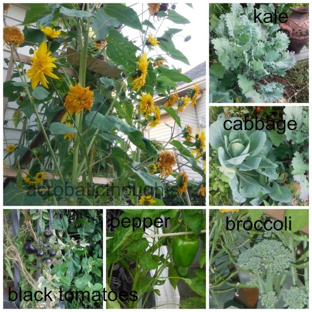 Collage garden