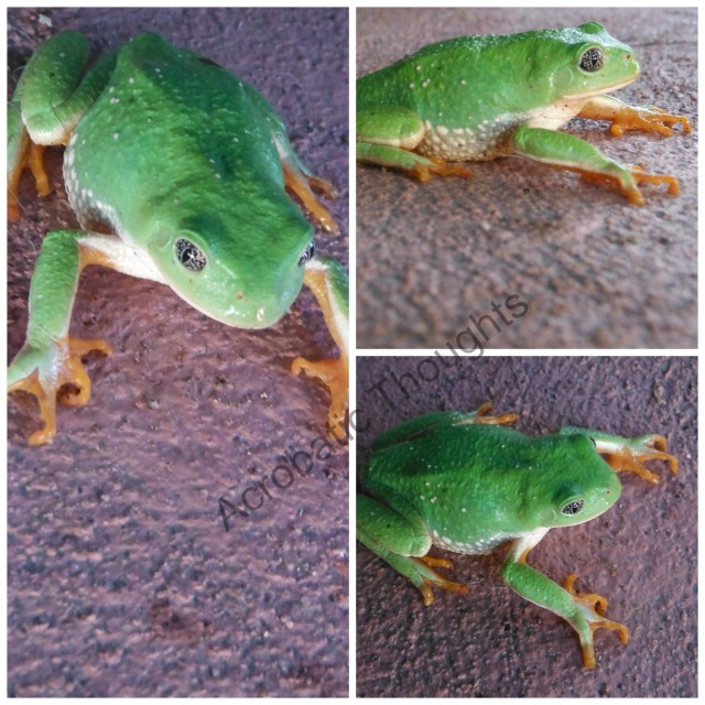 Collage Frog