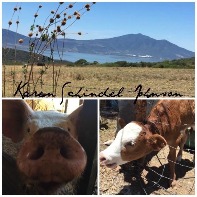 Collage 2nd farm