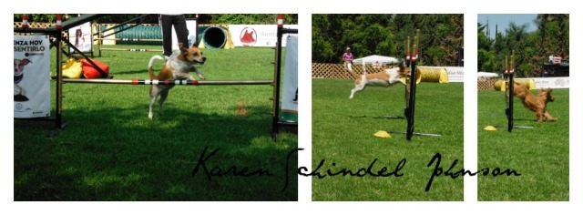 Collage Dog Jump