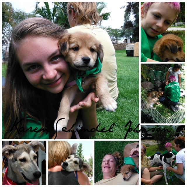 Puppy Love.  One of the pups was adopted by a resident here at Hotel Perico so Gaelyn gets to puppy sit India now.