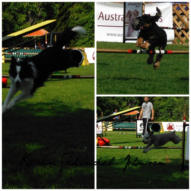 Collage Dogs jump