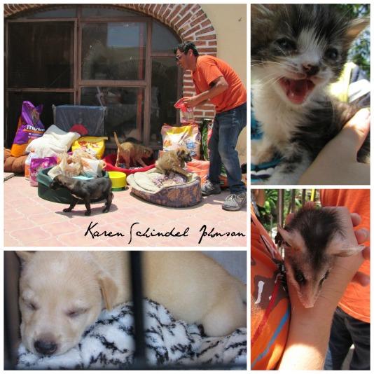 Animal-Rescue-Chapala-Mexico-Donations